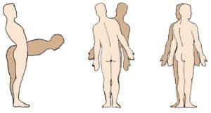 rotacion y flexión del tronco