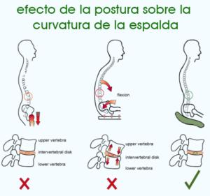 Efecto de la postura sobre curva de la espalda - semisitting - ergonomik
